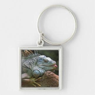 Iguana key chain