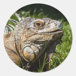 Iguana Lizard Classic Round Sticker