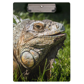 Iguana Lizard Clipboard