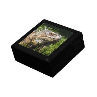 Iguana Lizard Gift Box
