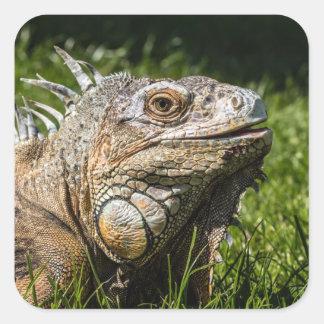 Iguana Lizard Square Sticker