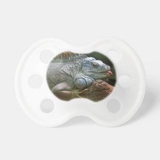 Iguana pacifier