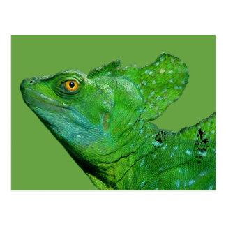 Iguana postcard