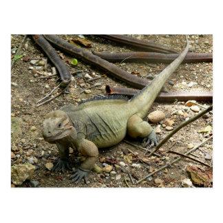Iguana Postcards
