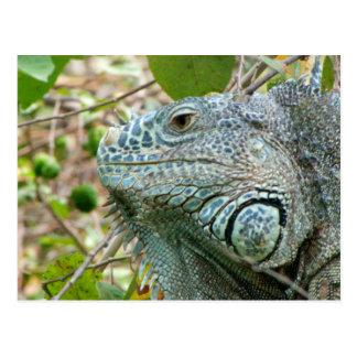 Iguana Profile Postcard