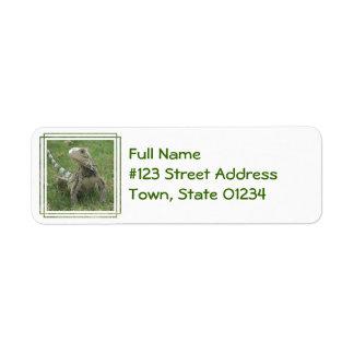 Iguana Return Address Label