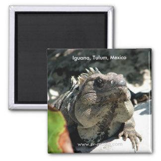 Iguana, Tulum, Mexico Magnet