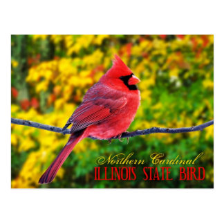 Illinois State Bird - Northern Cardinal Postcard