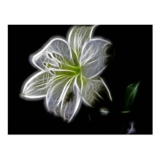 Illuminated like Outline of a White lily Flower Postcard