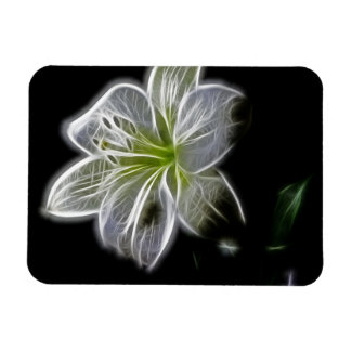 Illuminated like Outline of a White lily Flower Magnets