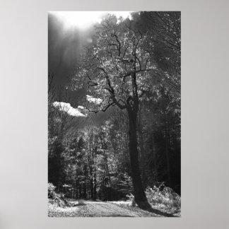 Illuminated Tree Poster