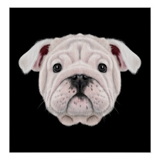 Illustrated portrait of English Bulldog puppy. Poster