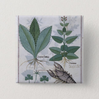 Illustration from the 'Book of Simple Medicines' 15 Cm Square Badge