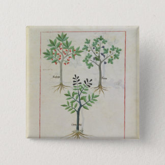 Illustration from the 'Book of Simple Medicines' 2 15 Cm Square Badge