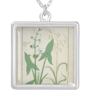 Illustration from the 'Book of Simple Medicines' 2 Necklaces