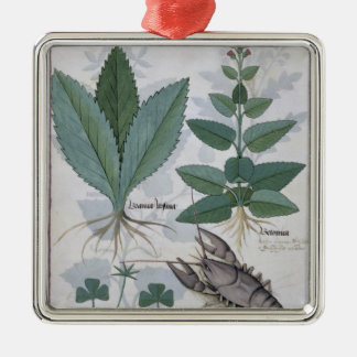 Illustration from the 'Book of Simple Medicines' Christmas Ornament