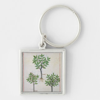 Illustration from the 'Book of Simple Medicines' Key Ring