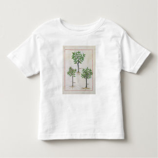 Illustration from the 'Book of Simple Medicines' Toddler T-Shirt
