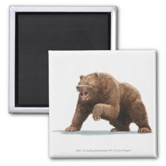 Illustration of a Brown bear Square Magnet