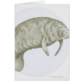 Illustration of a Manatee (Trichechus sp.) Card