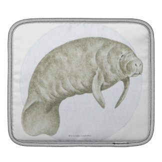 Illustration of a Manatee (Trichechus sp.) iPad Sleeve