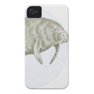 Illustration of a Manatee (Trichechus sp.) iPhone 4 Case-Mate Case