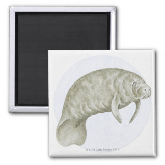 Illustration of a Manatee (Trichechus sp.) Magnet