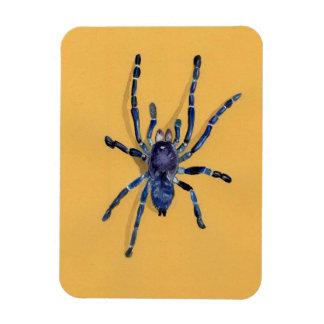 illustration of a spider rectangle magnet