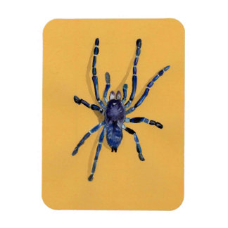illustration of a spider rectangular photo magnet