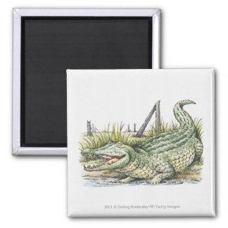 Illustration of alligator on the shore magnet