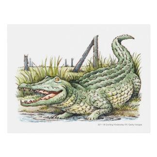 Illustration of alligator on the shore post card