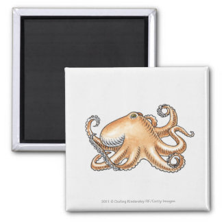 Illustration of an octopus magnets