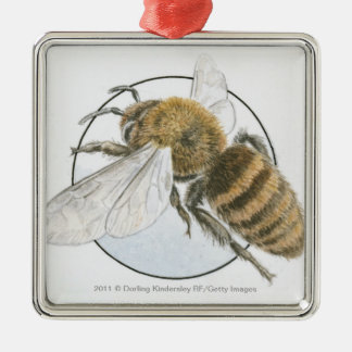 Illustration of European Honey Bee Christmas Ornament
