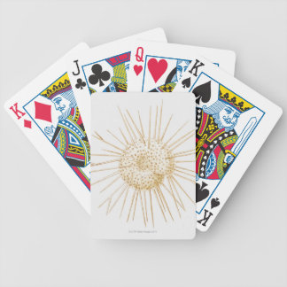Illustration of foraminiferan shell bicycle playing cards