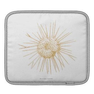 Illustration of foraminiferan shell iPad sleeve