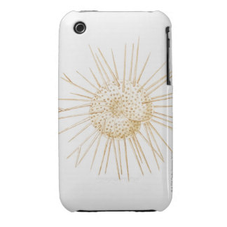 Illustration of foraminiferan shell iPhone 3 case