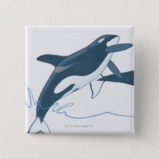 Illustration of Killer Whales (Orcinus orca) 15 Cm Square Badge