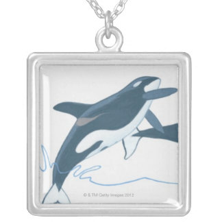 Illustration of Killer Whales (Orcinus orca) Silver Plated Necklace