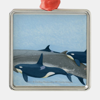Illustration of Killer Whales working in a group Silver-Colored Square Decoration