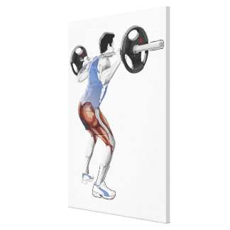 Illustration of muscles used by man to lift canvas print
