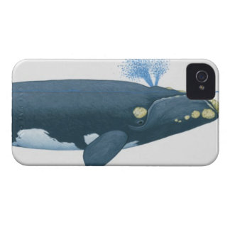 Illustration of North Pacific Right Whale iPhone 4 Case-Mate Case