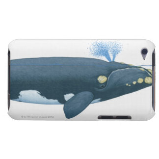 Illustration of North Pacific Right Whale iPod Touch Case