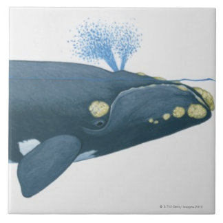 Illustration of North Pacific Right Whale Tile