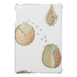 Illustration of the life cycle of a Selaginella iPad Mini Cover