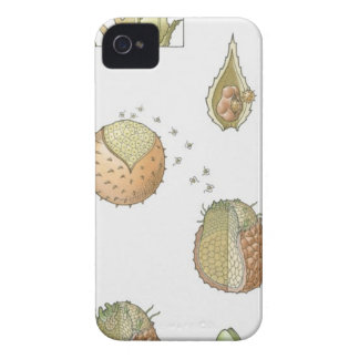 Illustration of the life cycle of a Selaginella iPhone 4 Case-Mate Case