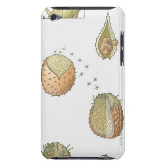 Illustration of the life cycle of a Selaginella iPod Case-Mate Case
