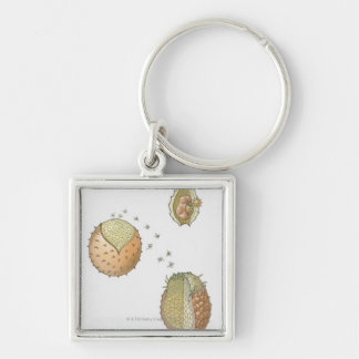 Illustration of the life cycle of a Selaginella Key Ring