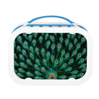 Illustration With Peacock Feathers on Black Lunchboxes