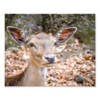I'm All Ears Photo Print