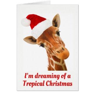 I'm dreaming of a Tropical Christmas | Ca